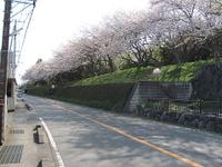 Sakura17