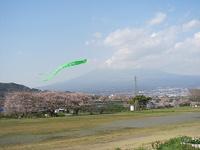 Sakura21