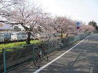 Sakura23