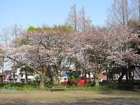 Sakura24