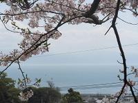 Hanami06