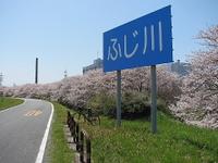 Hanami13